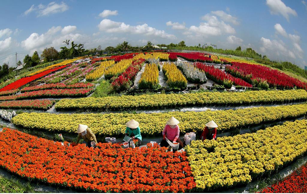 Image result for làng hoa sa đéc đồng tháp đón tết 2020